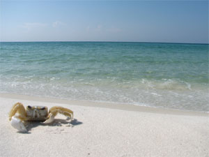 Origin Of Destin S Beautiful White Sand