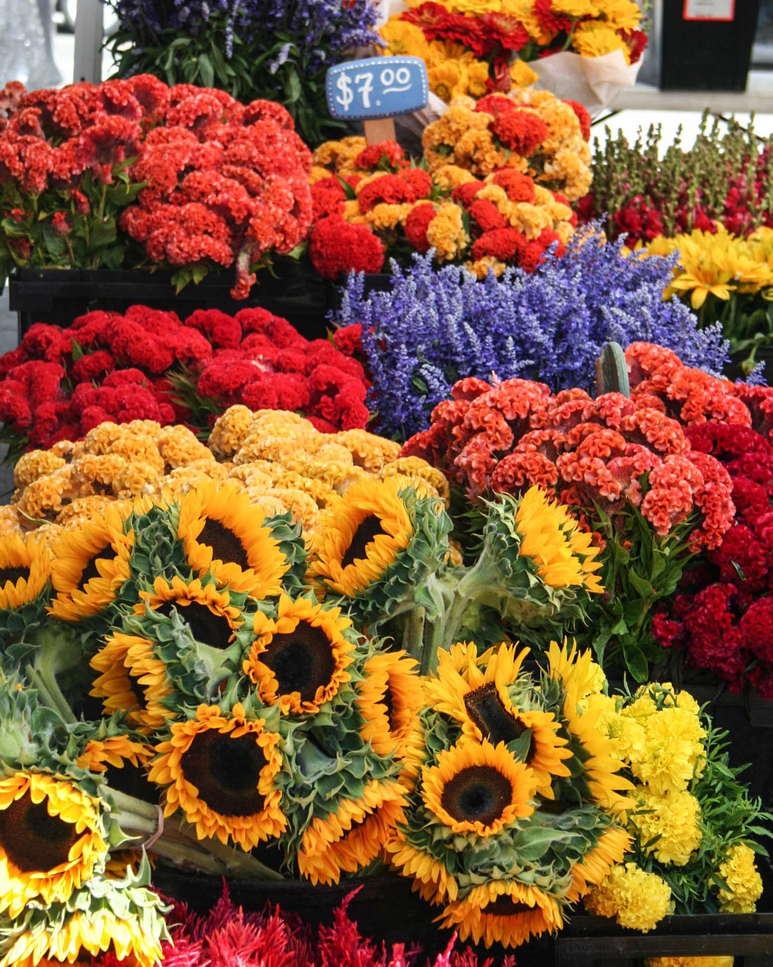 flowers-2107143_1920.jpg