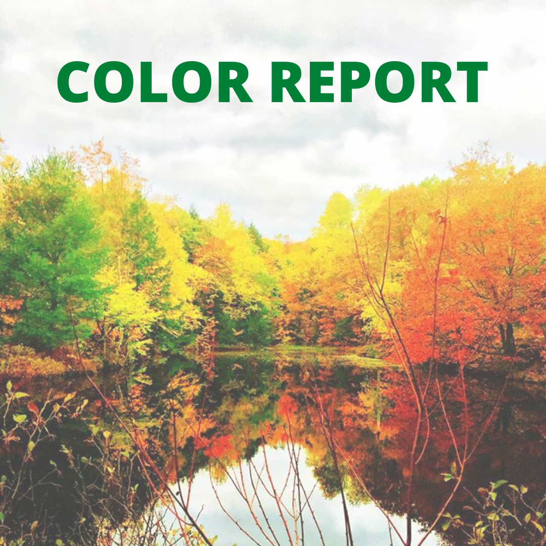 COLOR-REPORT-(1)(1).png