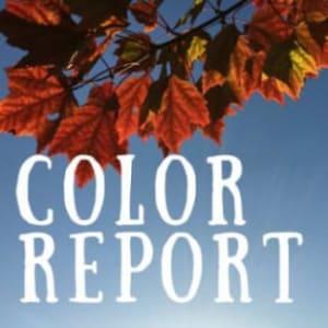 Color-Report.jpg