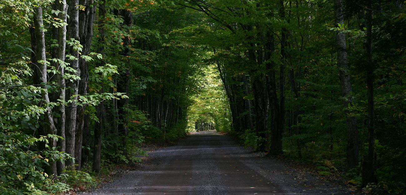 Covered-Road-1.jpg