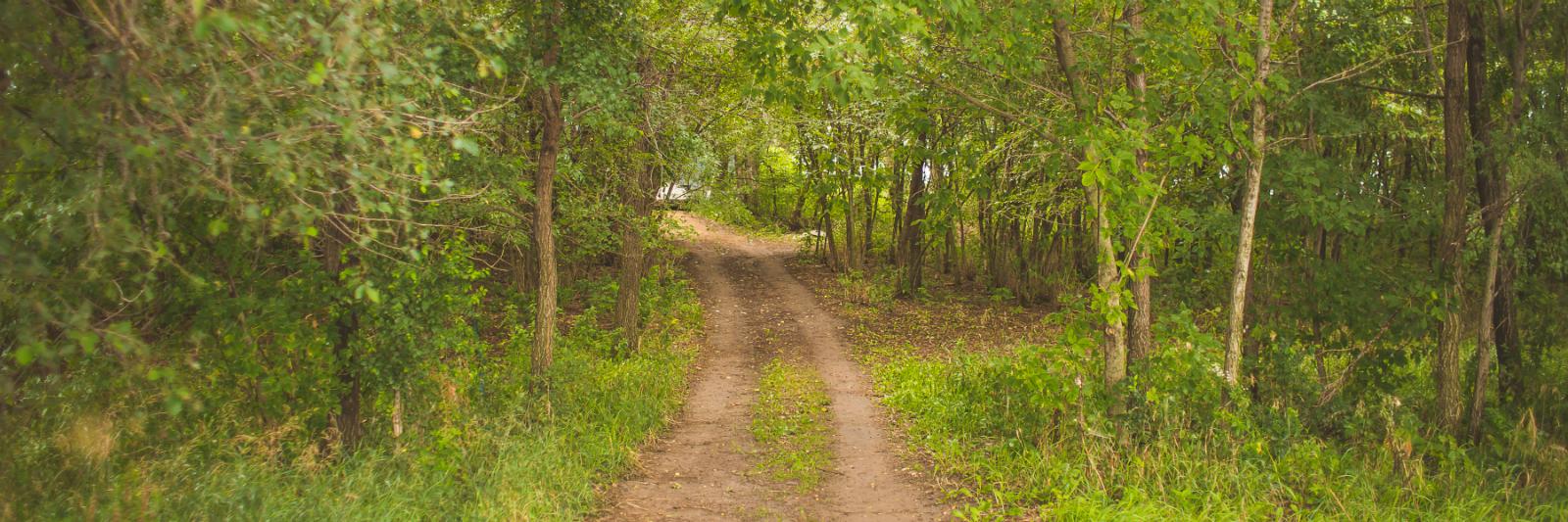 ttf-path.jpg