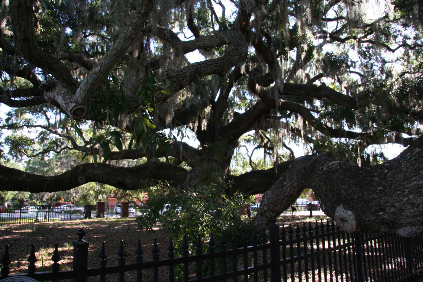 Baranoff-Tree.jpg