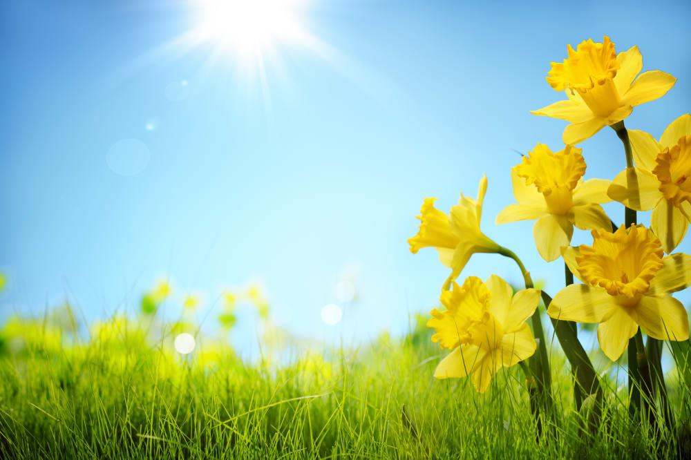 SpringFlowers-SpringGetawayPackage-w1000.jpg