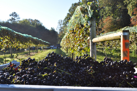 odom-springs-vineyard-small.jpg