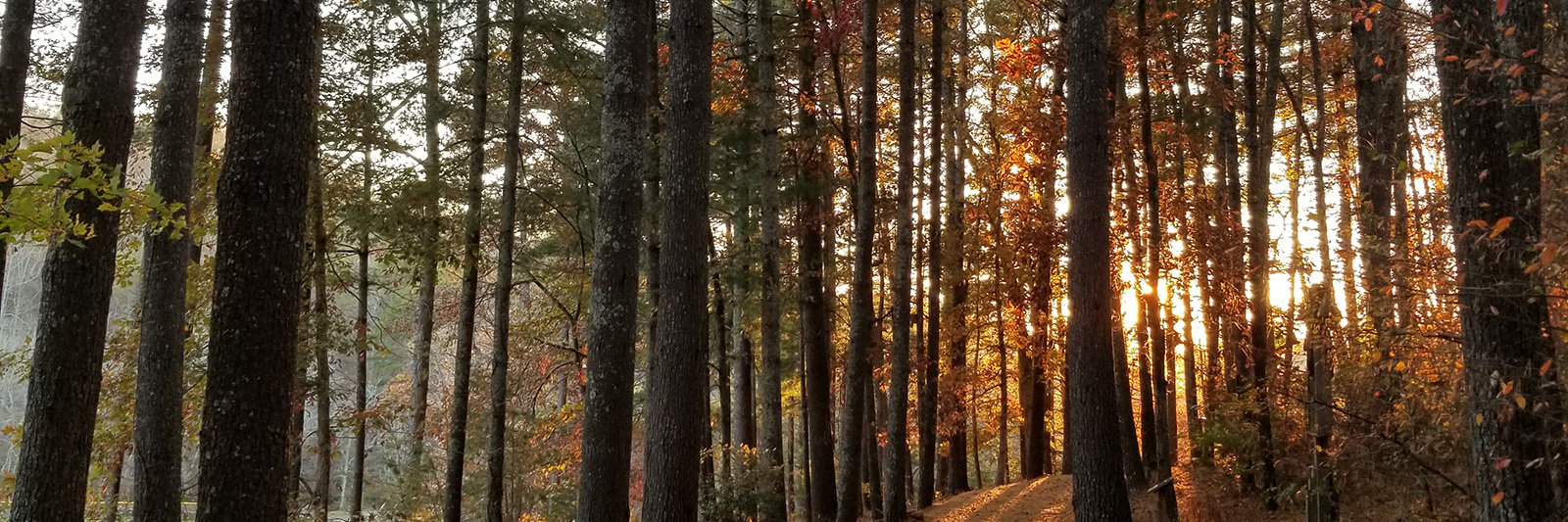 FallTrees_Banner.jpg