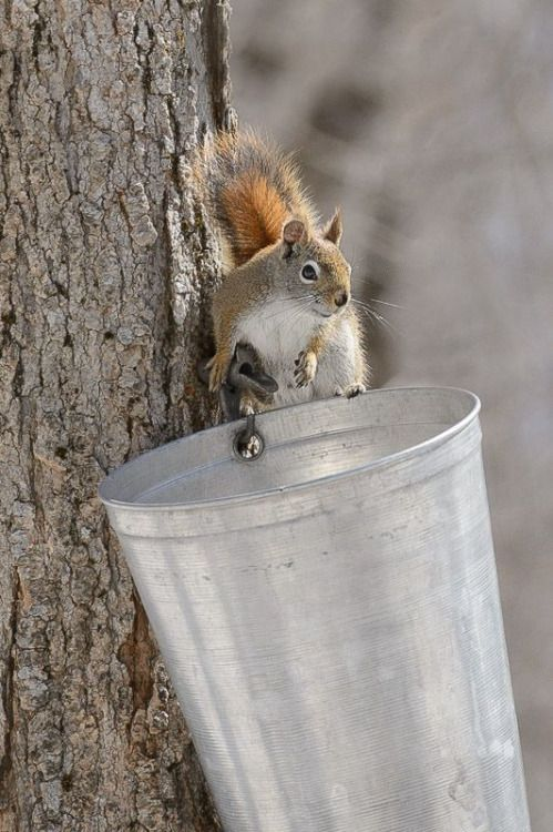squirrel-bucket.jpg