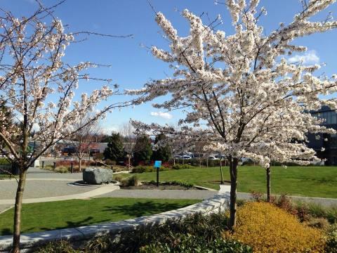 Burien_Springtime-w480.jpg