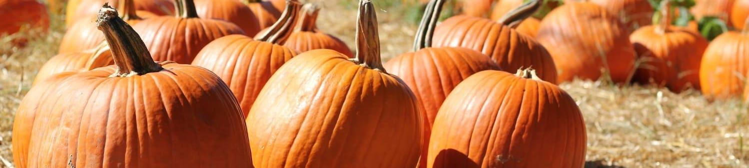pumpkins-w1497.jpg