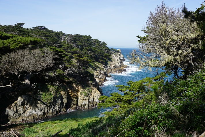 Point Lobos State Natural Reserve by Bricha Kendrick