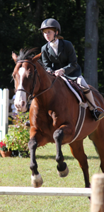 Rotary Horse Show