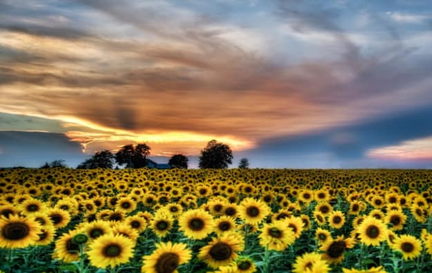 MICHAEL_JOHNSON_scenery-(640x511)-w625.jpg