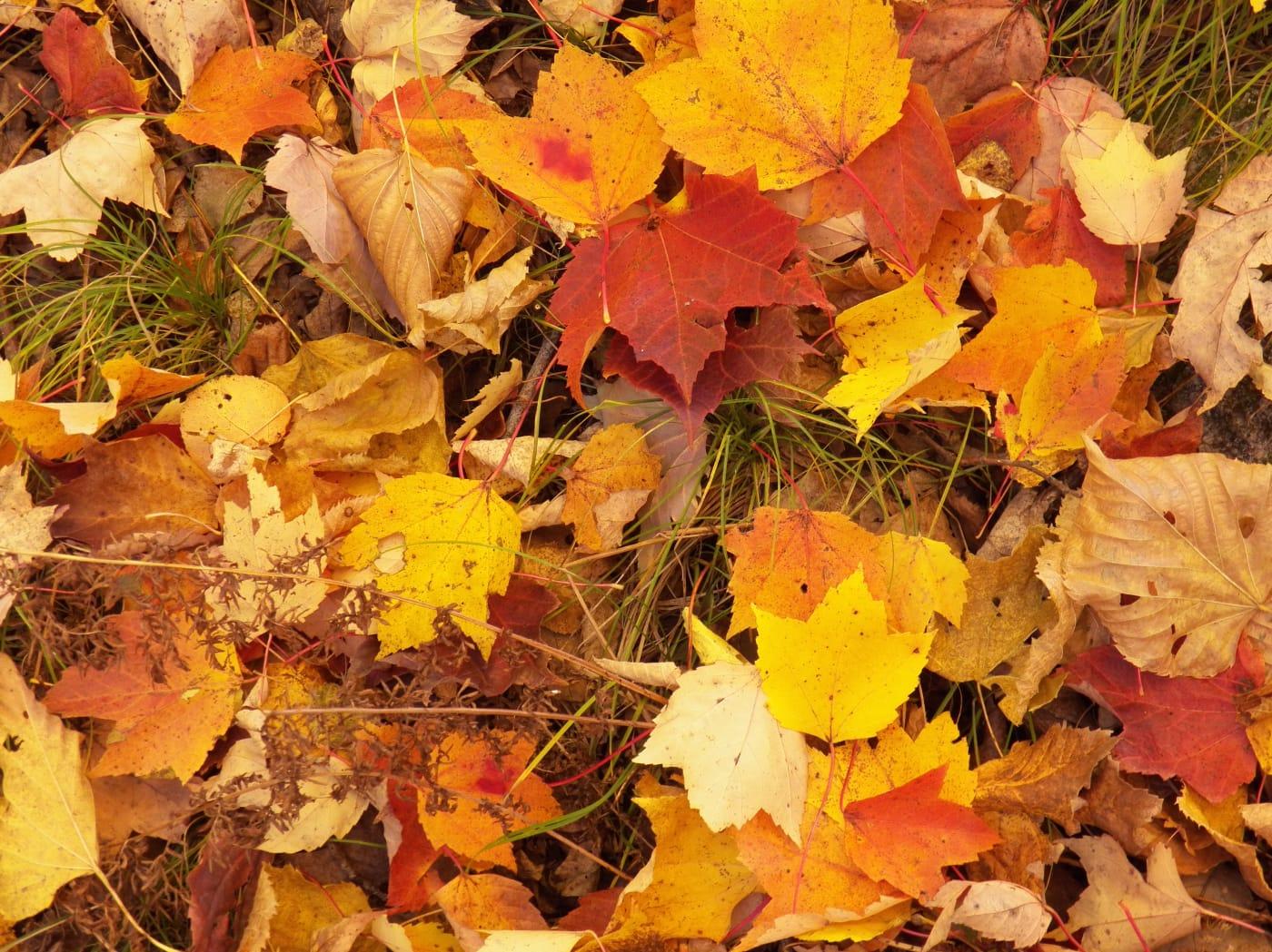leaf-floor-w1400.jpg