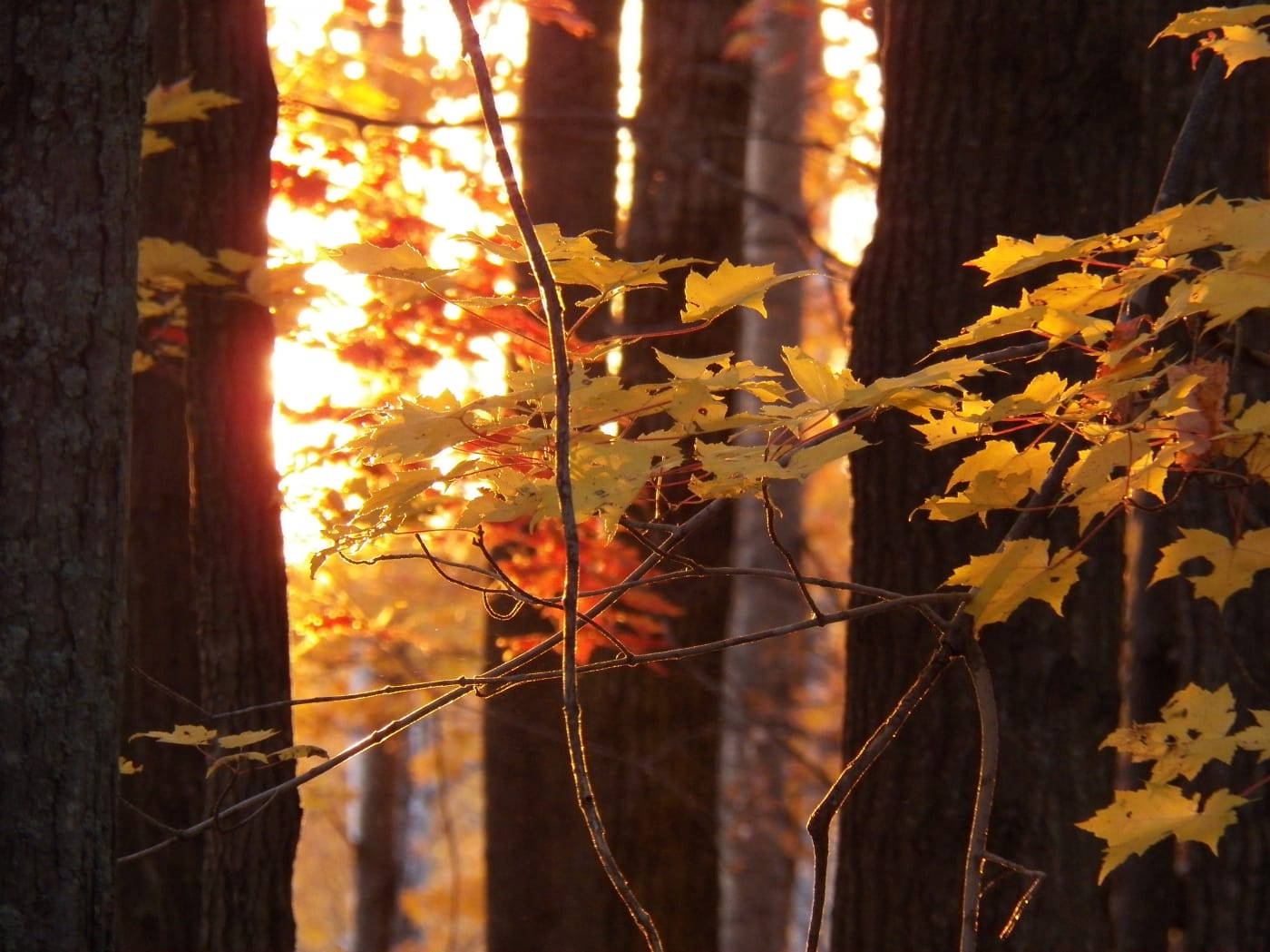 my-favorite-sunset-fall-w1400.jpg