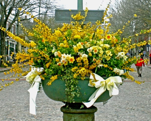 Daffodil-Fountain-w600.jpg