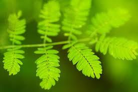 fresh-fern.jpg