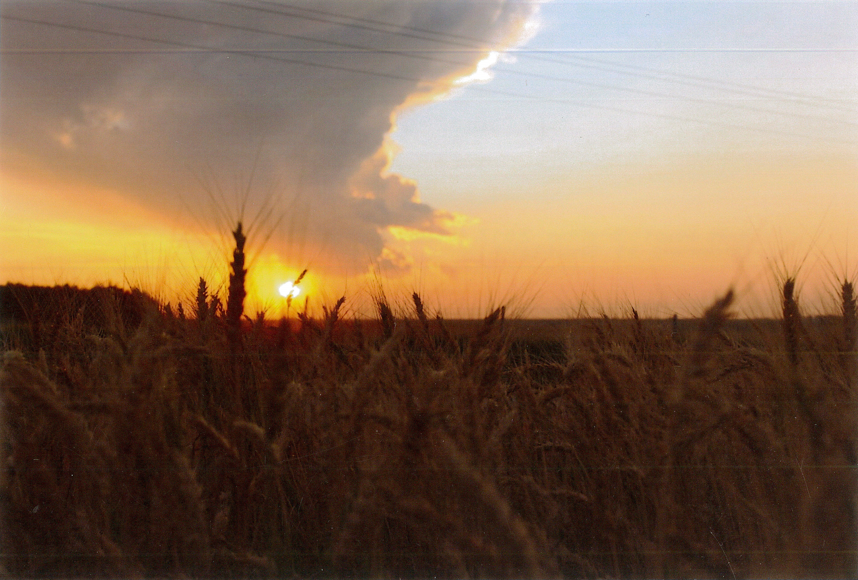 Wheat-Sunrise.jpg