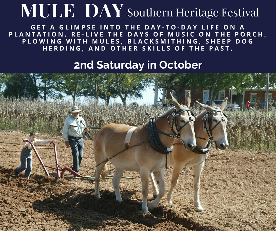 Mule-Day-Southern-Heritage-Festival.jpg