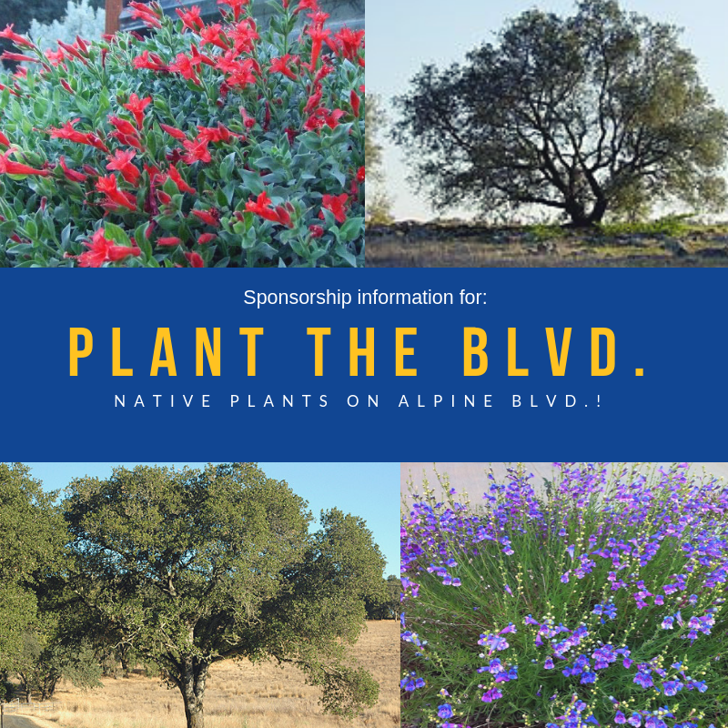 Plant-the-Blvd.-(1).png