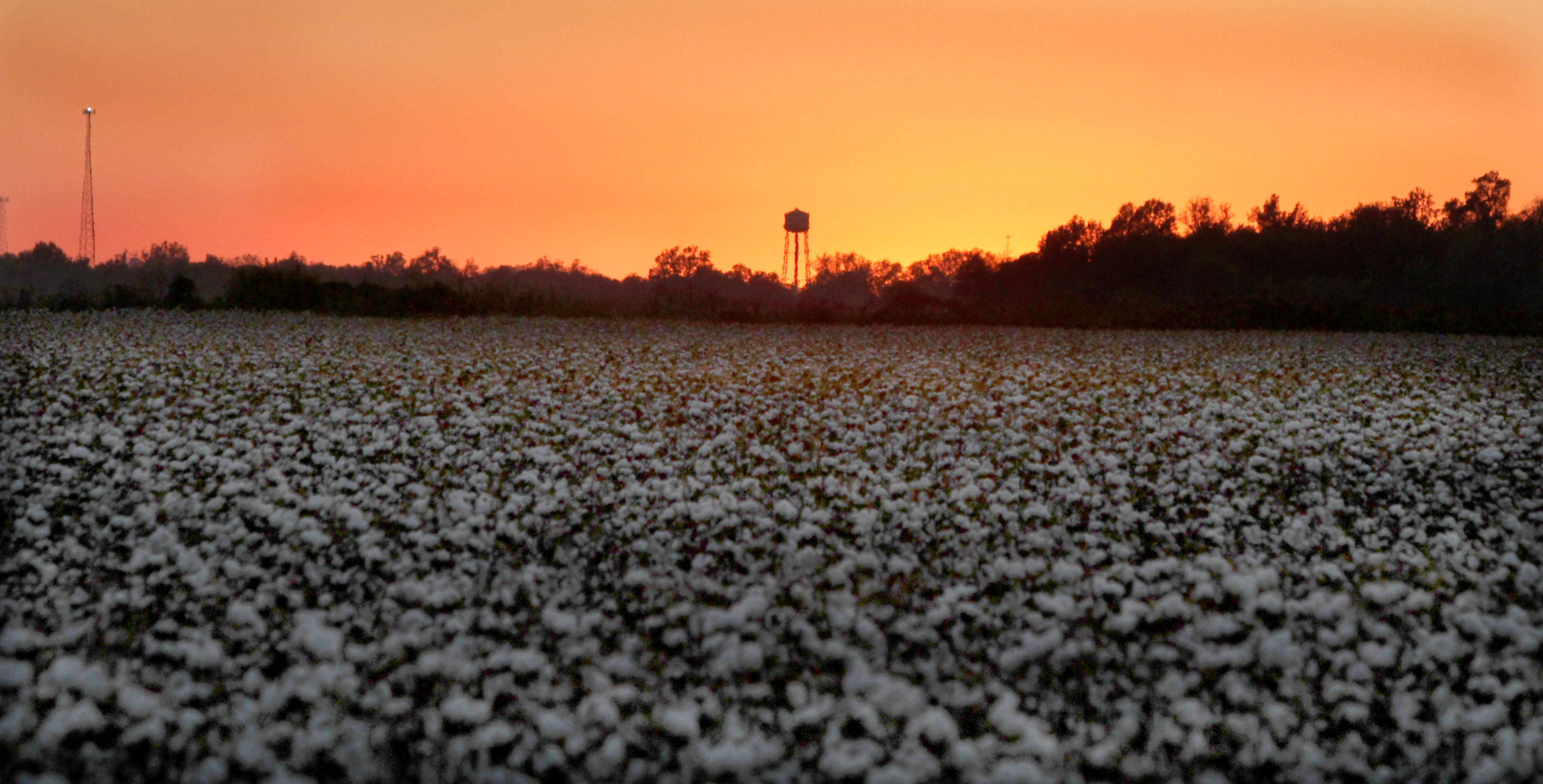 DJenkins_Cotton-Sunset-w1920.jpg
