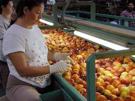 The Peach Industry - Peach Regional Chamber of Commerce - GA, GA