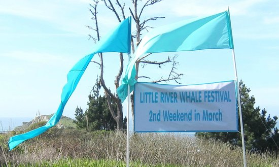 The Eight Annual LITTLE RIVER WHALE FESTIVAL Offers Lodging Specials At Properties Throughout Seaside Town Of Little River CA Family Fun Activities