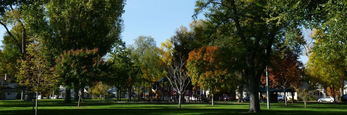 TreesSlider.jpg