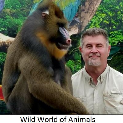 wild-world-of-animals.jpg