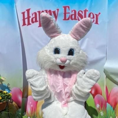 Bunny-Web-2.jpg