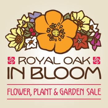 Royal Oak In Bloom