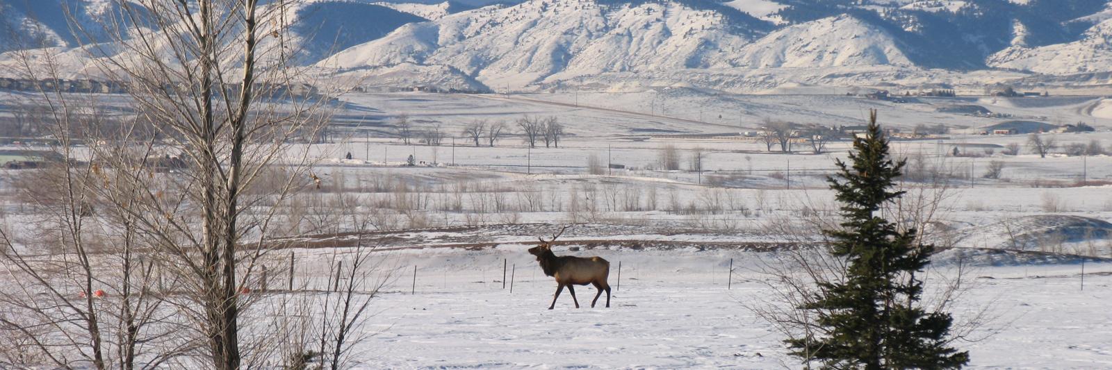 Heritage-Elk-1.jpg