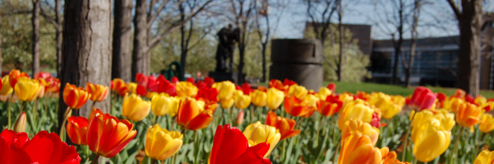 tulips-at-city-hall.jpg