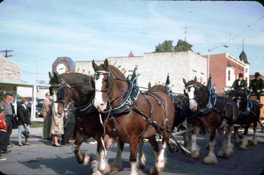 horse--and-buggy-old.jpg