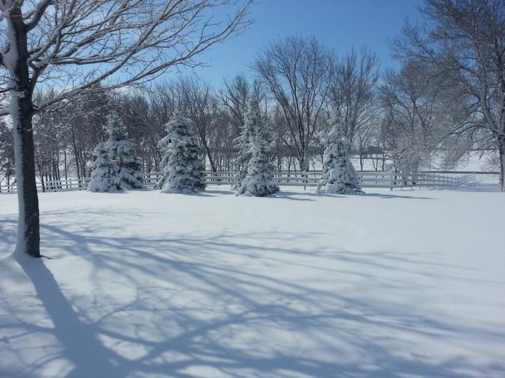 Winter-scene-w710.jpg