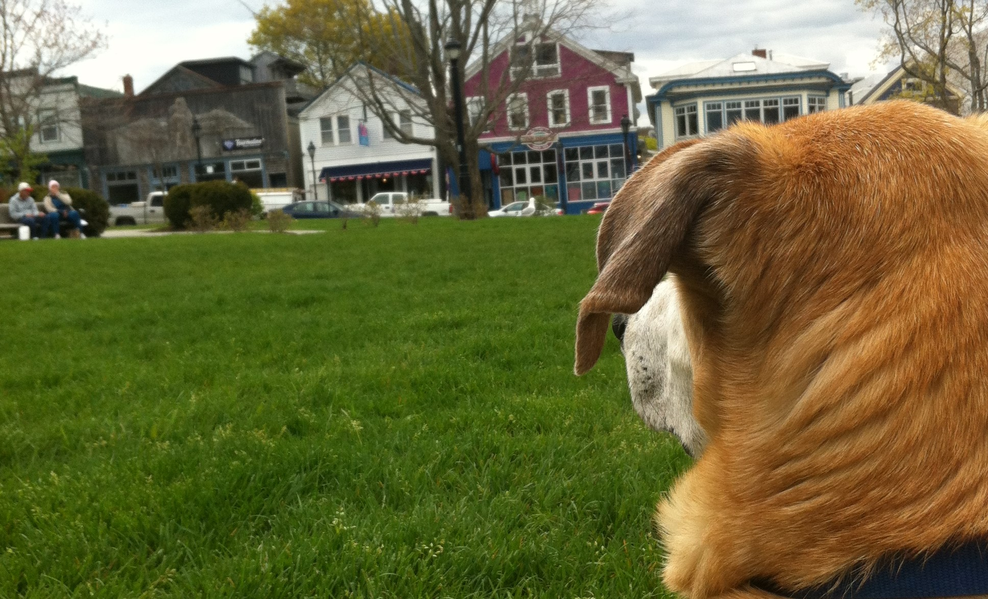 Bar Harbor Maine is a dog-friendly destination