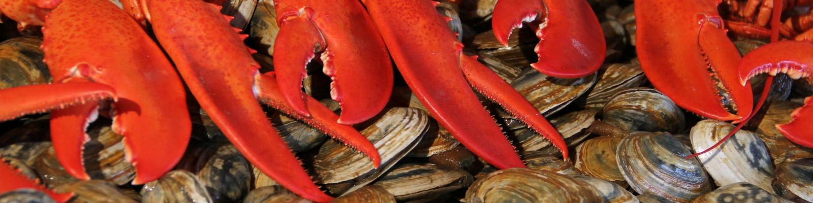 Seafood lobster steamers