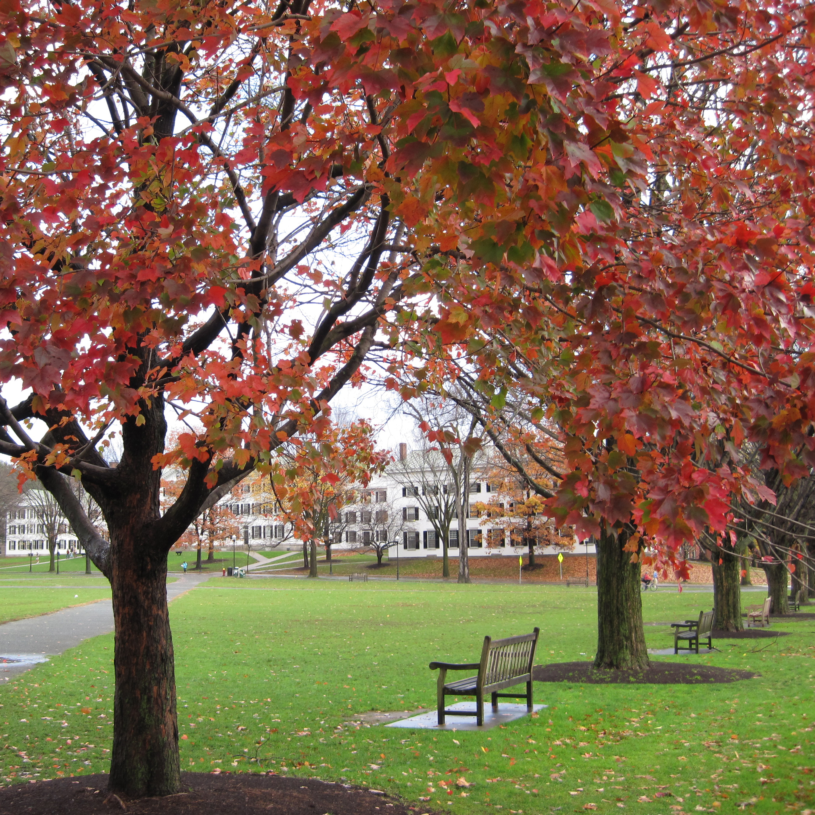 Dartmouth-Green-Fall-Leaves-Benches.jpg