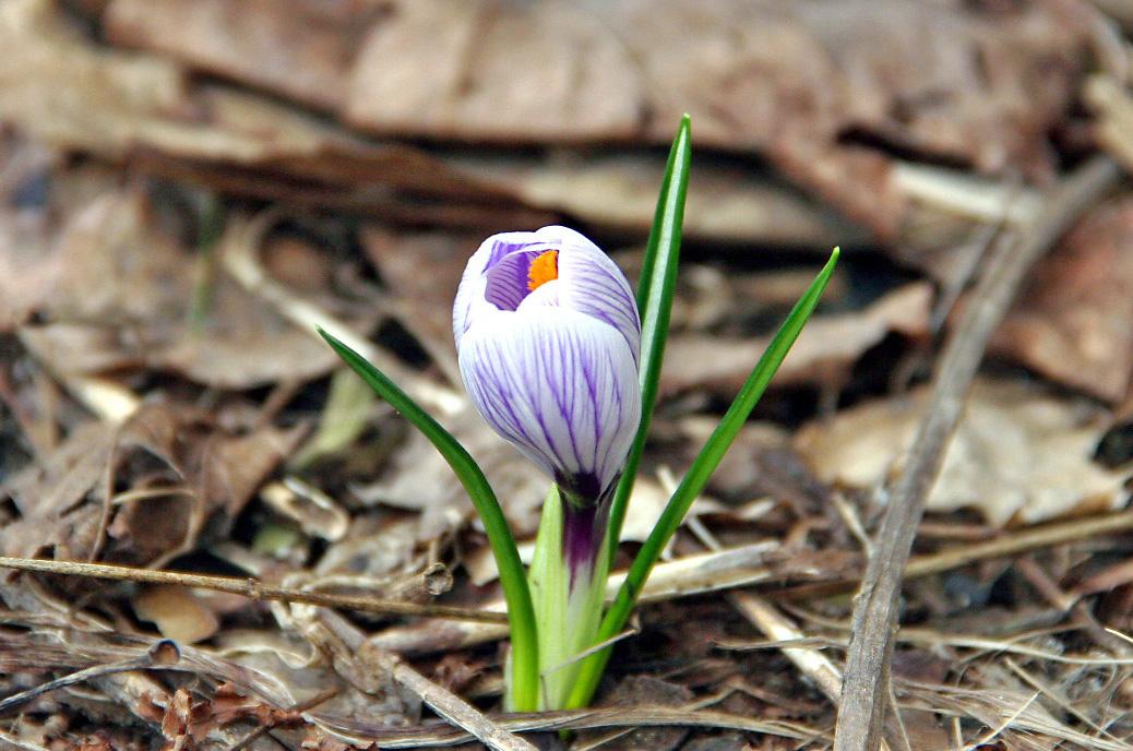 Spring-Flower-David-Nelson.JPG