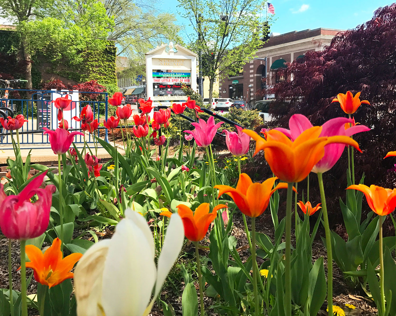 Spring is beautiful in downtown Hanover
