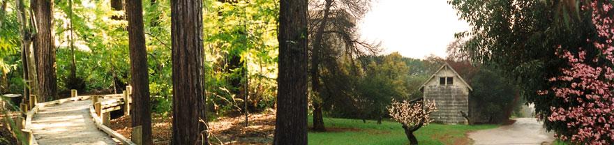 header-redwood-grove-(1).jpg