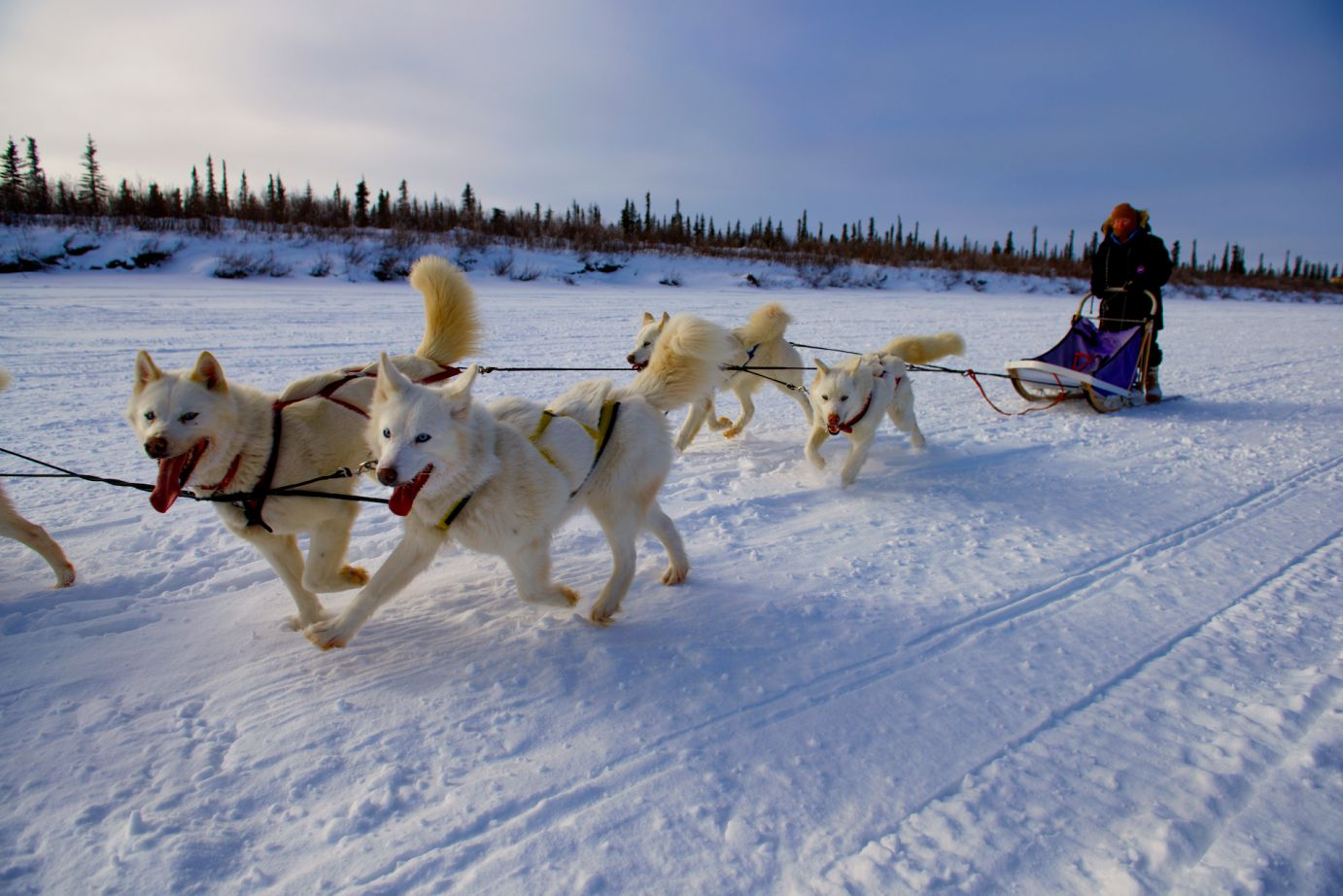 dog-mushing.jpg