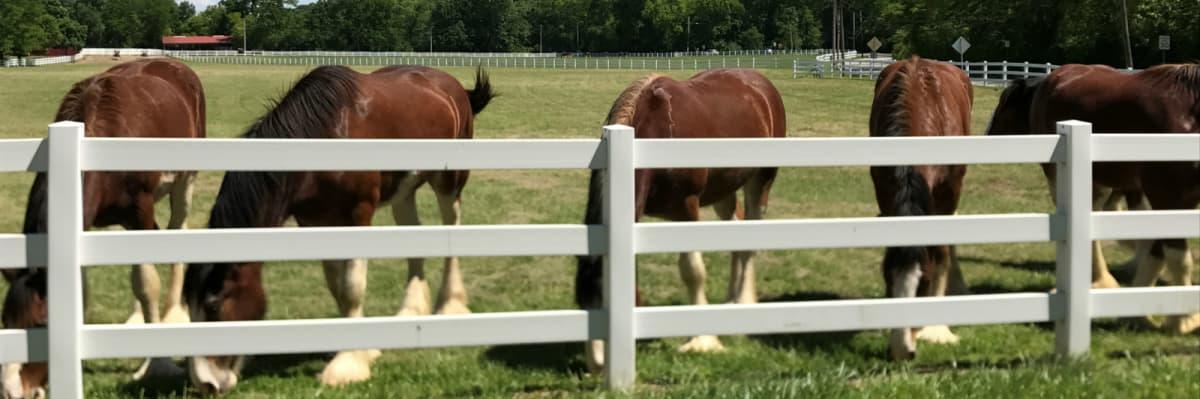 horses-cropped-w1200.jpg