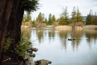 Rohnert-Park--Roberts-Lake-2016-m.woolsey-4-w200.jpg