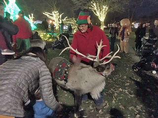 Reindeer-w320.jpg