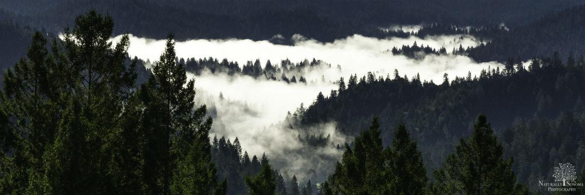 foggy-river-banner1200.jpg