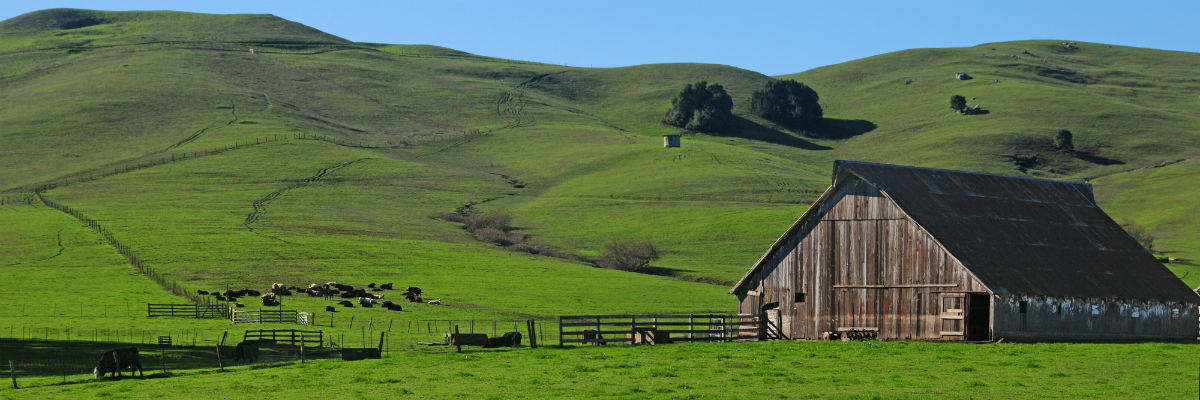 scenic_rolling_hills_Sonoma_County-w1200.jpg