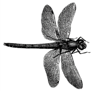 2021 Annual Dragonfly Nymph Program