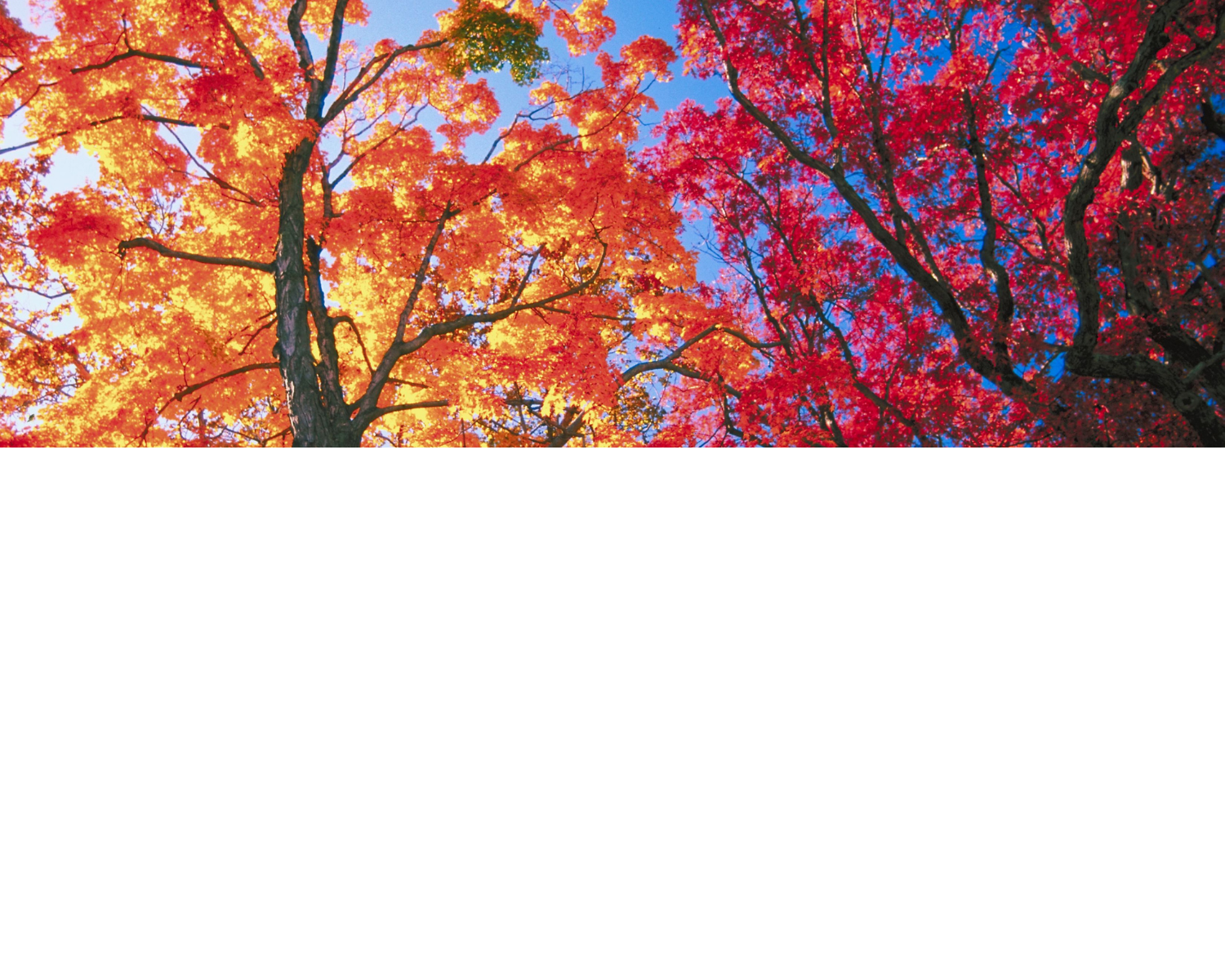 autumn--page-header-.png