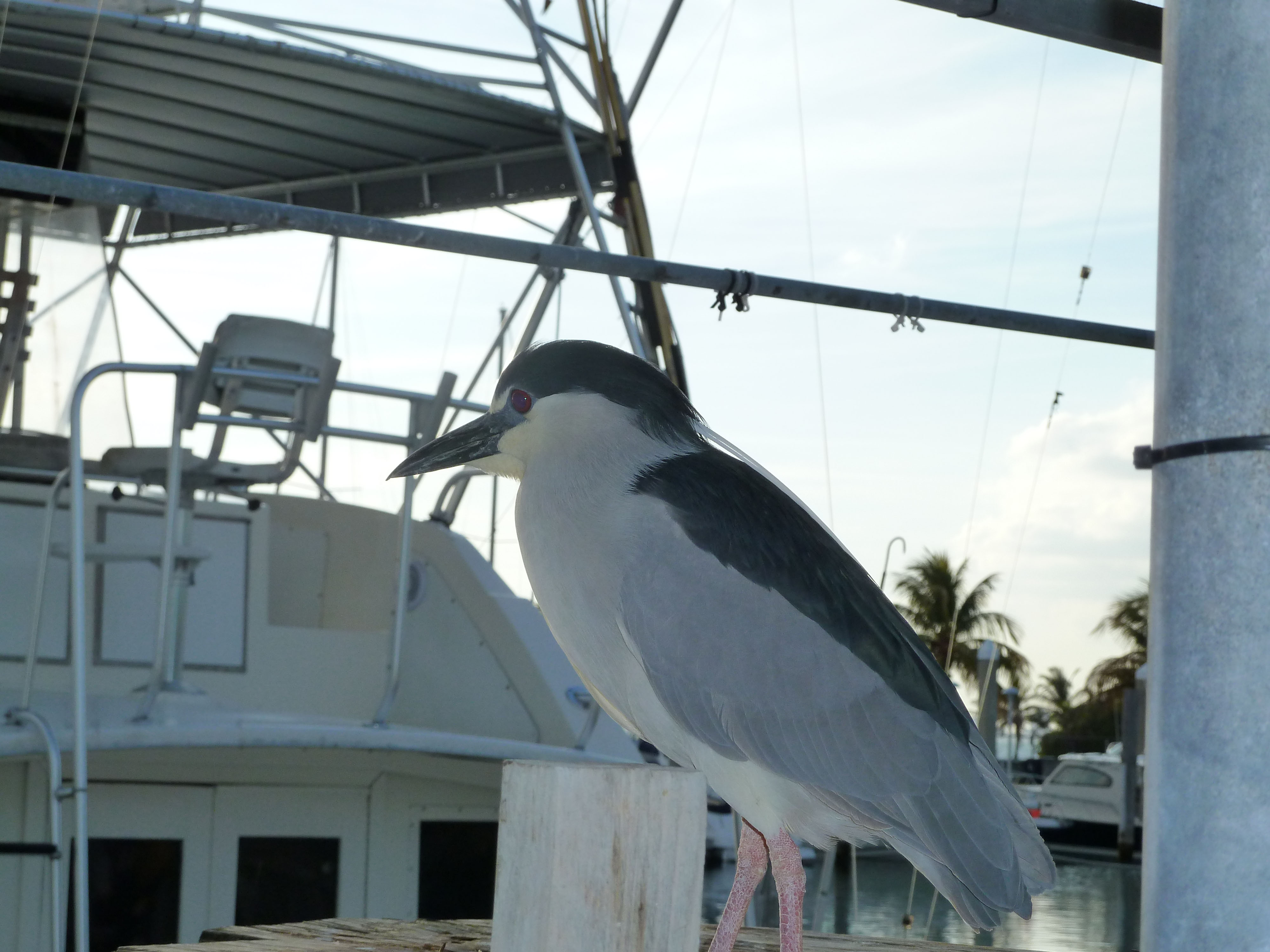 Crandon Marina Bird