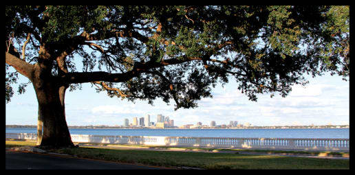 South Tampa_Bayshore